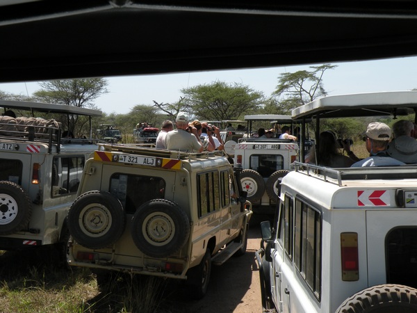 Leopard Traffic Jam
