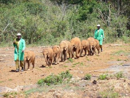 Baby elephants walking
