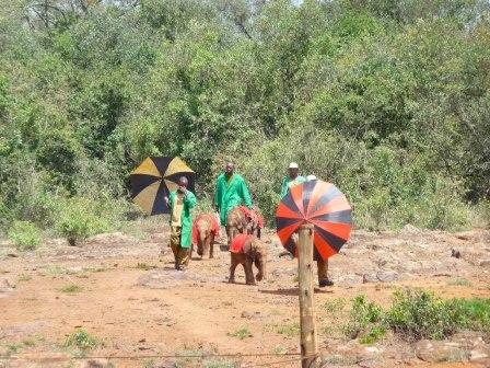 Sheldrick Elephant Trust - where they rescue elephants