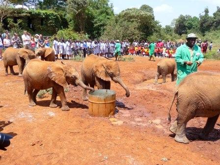 Eelephant Trust where they care for orphaned elephants